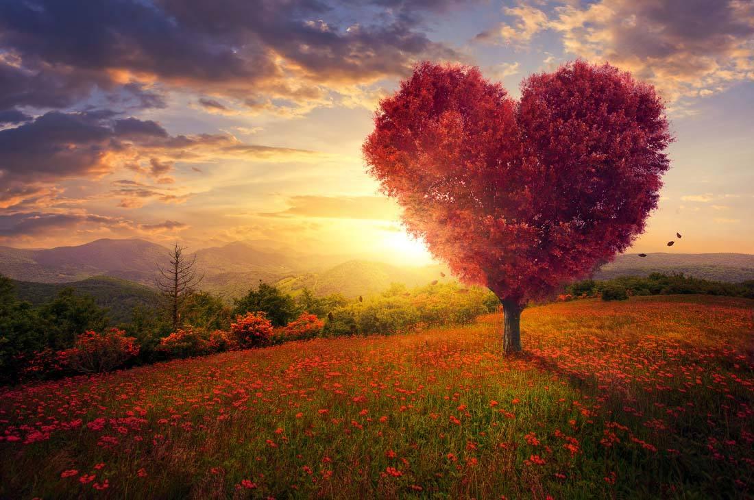 情感天地:所謂愛情,不要太過執着,平常心就好